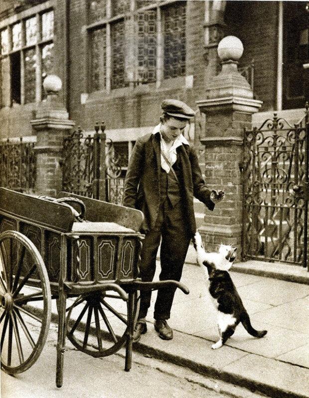 Traditionen und Gewohnheiten: Wie es möglich war, im viktorianischen Zeitalter als Katzenfutterlieferant zu arbeiten