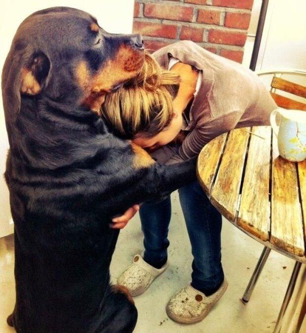 Die endlose Liebe der Hunde zu ihren Besitzern wurde auf