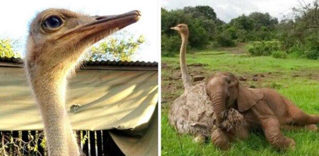 Der Elefant umarmt jeden Tag einen Strauß: Er hat seine Mutter verloren, hat aber einen Freund gefunden