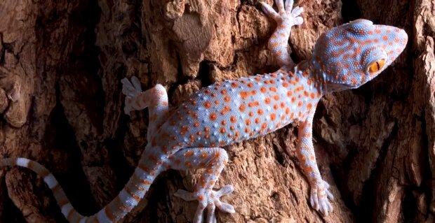 Exotisches Tier. Quelle: Screenshot YouTube