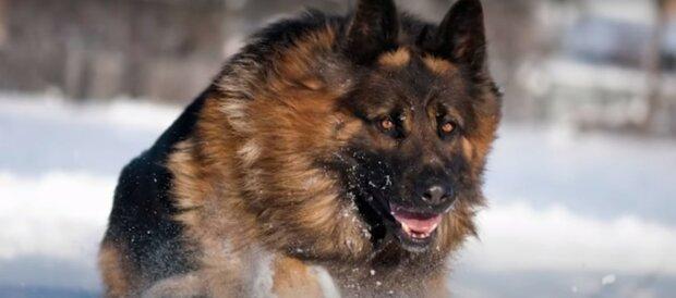Der tapfere Hund. Quelle: Youtube Screenshot