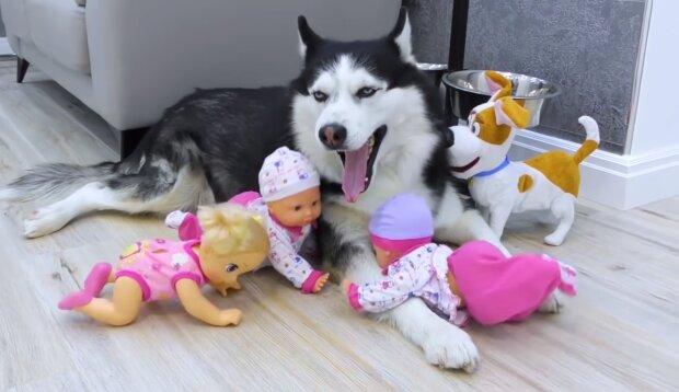 Der Hunde mit den Spielzeug. Quelle:Screenshot YouTube