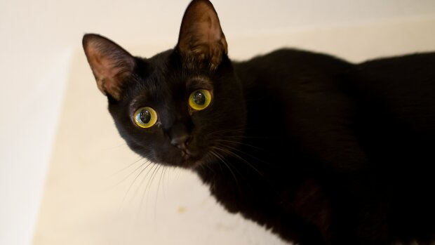 Verwandte stritten lange Zeit um die Erbe: Die Katze des Anwalts konnte den Streit schlichten, Details