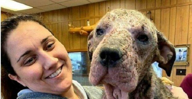 Die Frau hat einen kranken Hund beschützt und geheilt, jetzt sind sie eine echte Familie
