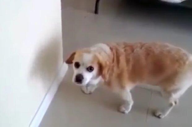 Schlauer Hund. Quelle: Screenshot Youtube