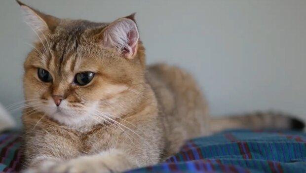 Designer Katze. Quelle: YouTube Screenshot