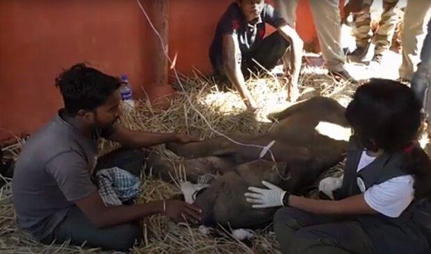 Die Rettung vom kranken Elefantenbaby. Quelle: Screenshot YouTube