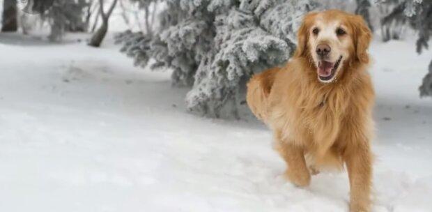 Der treue Hund. Quelle: Screenshot YouTube