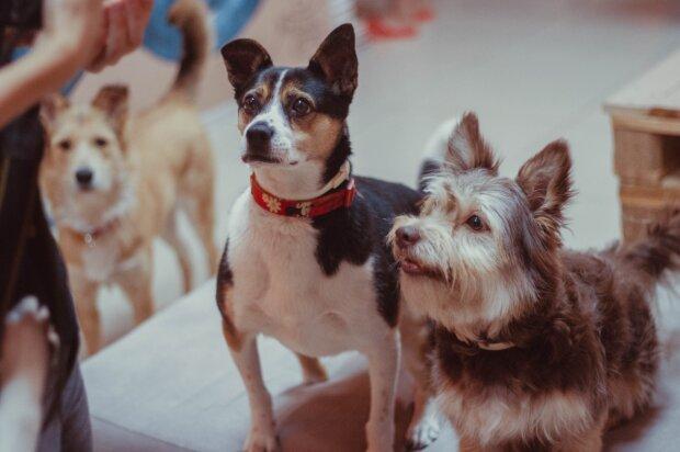 """Hundeliebhaber haben ein Café namens """"Dog House"""" geöffnet, damit streunende Hunde dort leben könnten"""