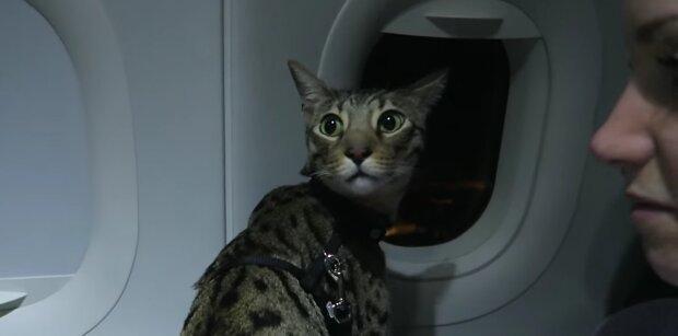 Die Katze ist eine Überraschung. Quelle: YouTube Screenshot