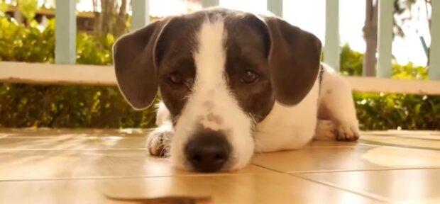 Der brave Hund. Quelle: Youtube Screenshot