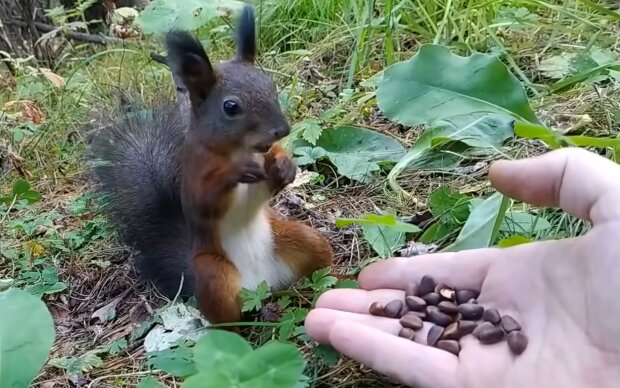 Eichhörnchen mit Nüssen. Quelle: YouTube Screenshot