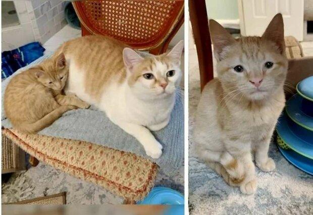 Ein Waisenkätzchen hat eine Mutterkatze gefunden und möchte sich von ihr nicht mehr trennen