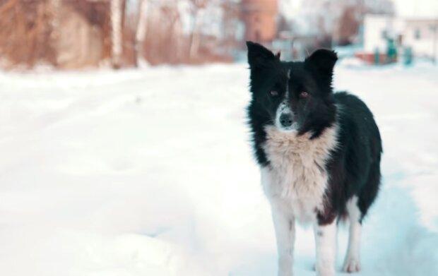 Treuer Freund: Der Hund bewachte die Gegenstände seines Besitzers, der in der Klinik war