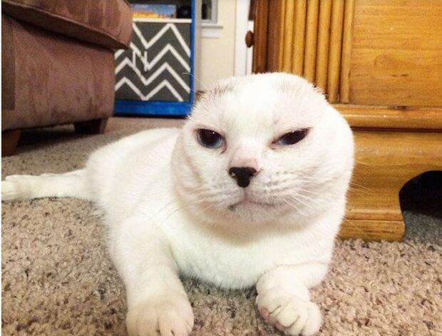 Die Frau adoptierte eine stille und taube Katze, die alles ignoriert, und sie rettete ihr Leben