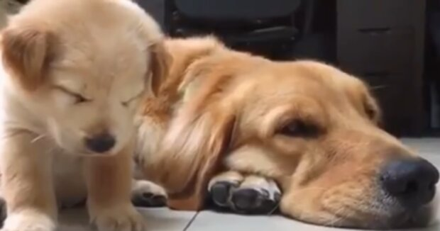 Die Hundefamilie. Quelle: YouTube Screenshot