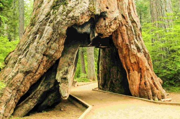 Eine Frau fällte die Bäume der Nachbarn wegen ihres Neides, bezahlte aber dafür