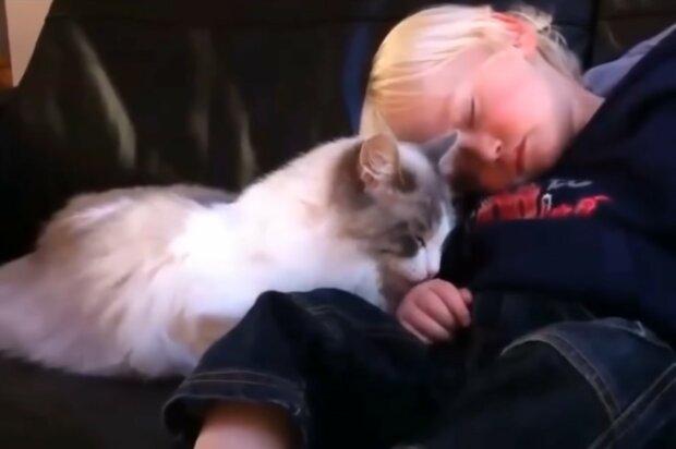 Die flauschige Ärztin: wie eine Katze einem Jungen hilft, seine Angst zu bewältigen