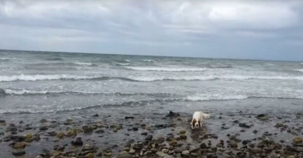 Der Fischer reagierte auf das Bellen seines Hundes und es stellte sich heraus, dass es einen Grund für das Bellen gab