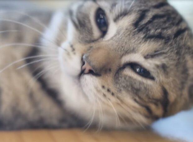 Die Katze. Quelle: Screenshot YouTube