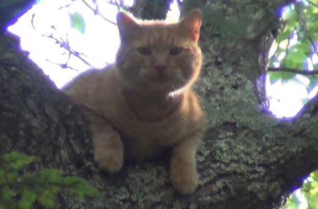 Katze auf dem Baum. Quelle: YouTube Screenshot