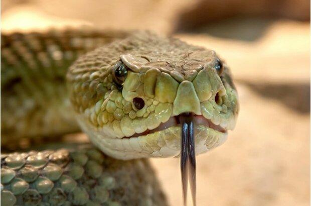 Der Mann fand ständig Schlangen zu Hause und konnte nicht verstehen, woher sie kamen