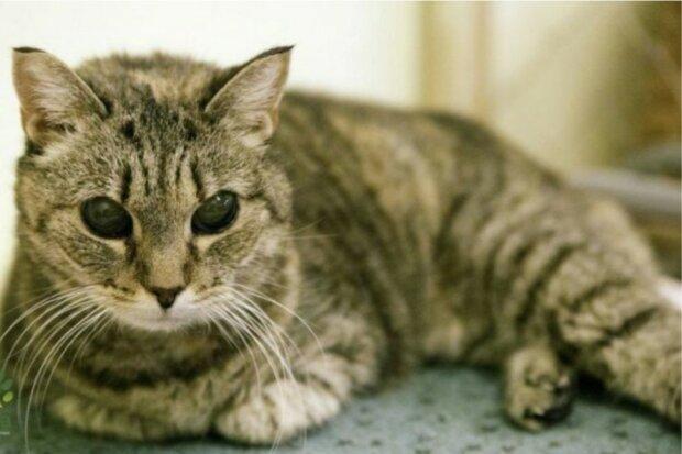 Eine Katze, die nicht sehen konnte, lebte vier Jahre lang in einem Tierheim, fand aber dennoch ein Zuhause