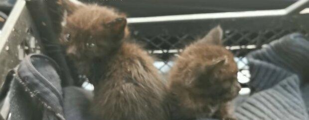 Vom Regen durchnässte Kätzchen. Quelle: Youtube Screenshot