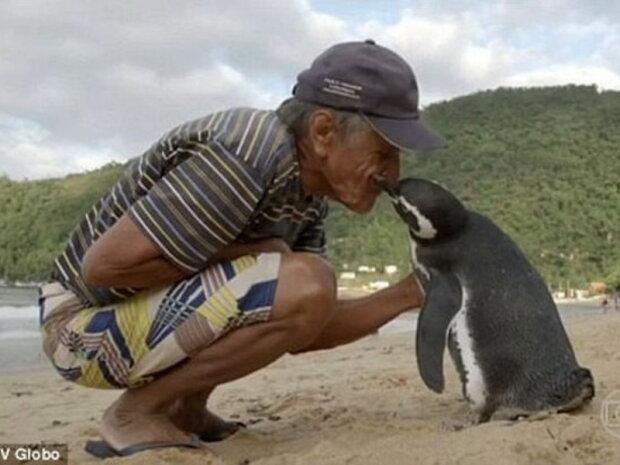 Pinguin schwimmt jedes Jahr mehr als fünftausend Kilometer, um seinen Retter zu treffen
