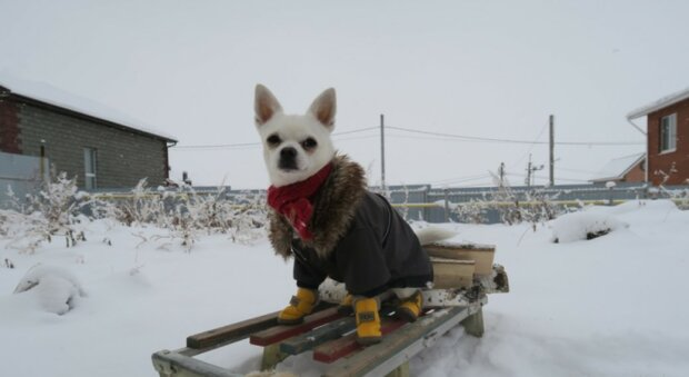 Der Junge hatte keine Angst vor dem Schnee und ging hinaus, um seinen Hund zu schlitten: Er erhielt dafür ein Geschenk