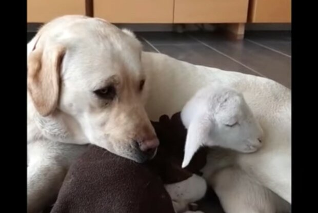 Charmante Freundschaft. Quelle: Screenshot YouTube