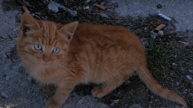 Eine streunende Katze. Quelle: YouTube Screenshot