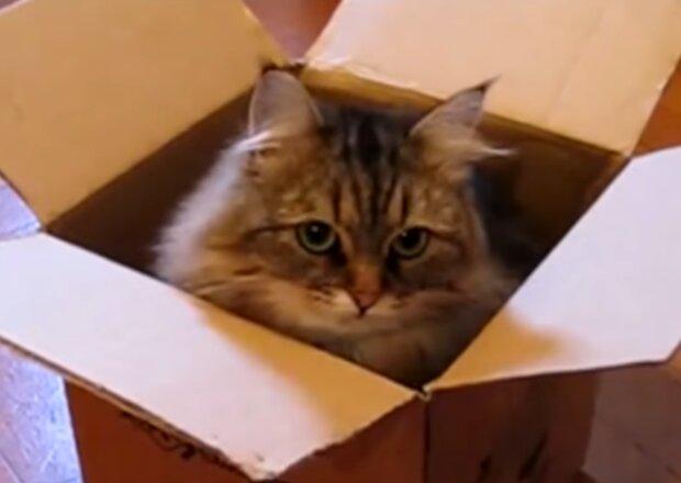 Katze im Karton. Quelle: Screenshot Youtube