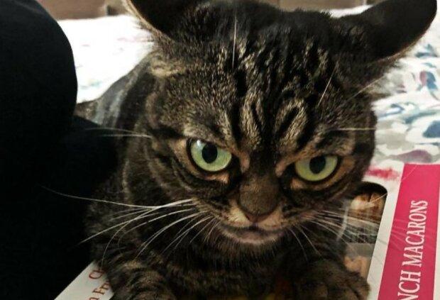 Emotionen auf dem Gesicht: Wahrscheinlich die böseste Katze der Welt