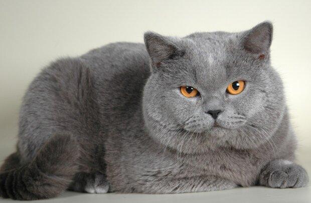 """""""Glaubt ihr nicht"""": Frau fleht Nachbarn an, ihre ohnehin schon übergewichtige Katze nicht zu füttern"""