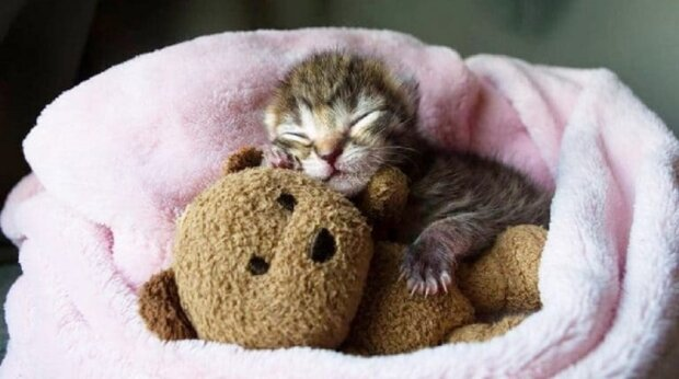 kitten-and-toy-768×429-1 (1)
