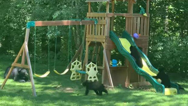 Bärenfamilie. Quelle: YouTube Screenshot