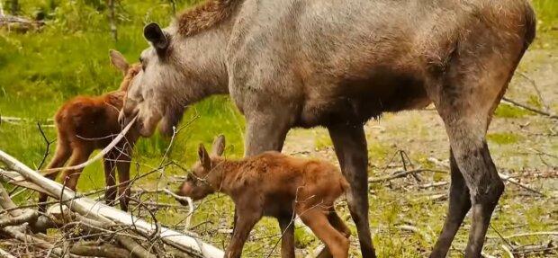 Mutti und die Babies. Quelle: Youtube Screenshot
