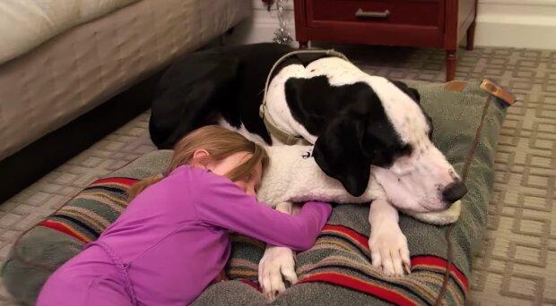 Der Hund half einem Mädchen mit eingeschränkter Beweglichkeit zu lernen, ohne Krücken laufen zu können