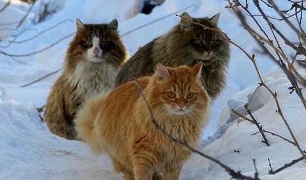 Drei Kätzchen. Quelle: YouTube Screenshot