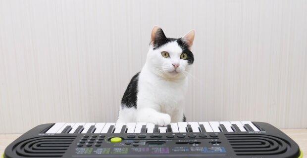 Echtes Talent: Frau filmte ihr Kätzchen beim fleißigen Klavierspielen