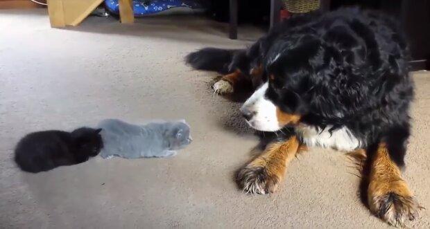 Die Freundschaft zwischen einen Hund un eine Katze. Quelle: Screenshot YouTube