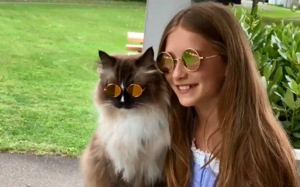 Die Katze, die jeder verehrt. Quelle: Youtube Screenshot