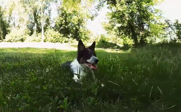 Verlorener Hund. Quelle:Screenshot YouTube