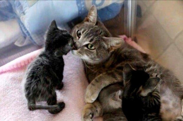 Alles für die zukünftige Mutter. Quelle: Screenshot YouTube