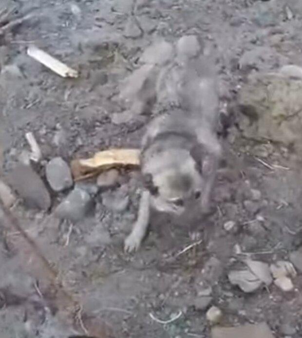 Während des Erdrutsches in Norwegen wurde ein Welpe gerettet. Einzelheiten