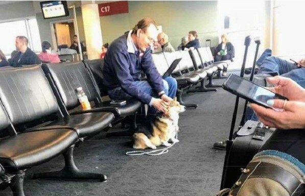 Das Mädchen nahm den Hund von einem sorglosen Besitzer. Es stellte sich heraus, dass der Hund den Menschen helfen kann