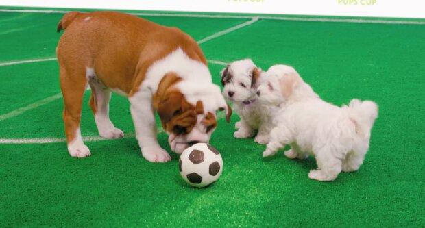 Hunde im Fußball. Quelle: YouTube Screenshot