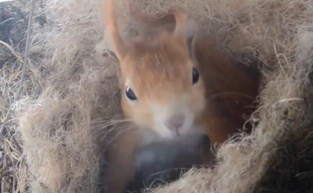 Eichhörnchen-Steve. Quelle: YouTube Screenshot