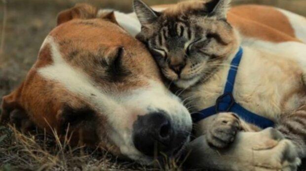 Enge Freundschaft. Quelle: Screenshot Youtube